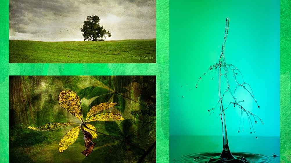 """Wall Of Green"" Photographic Exhibition"
